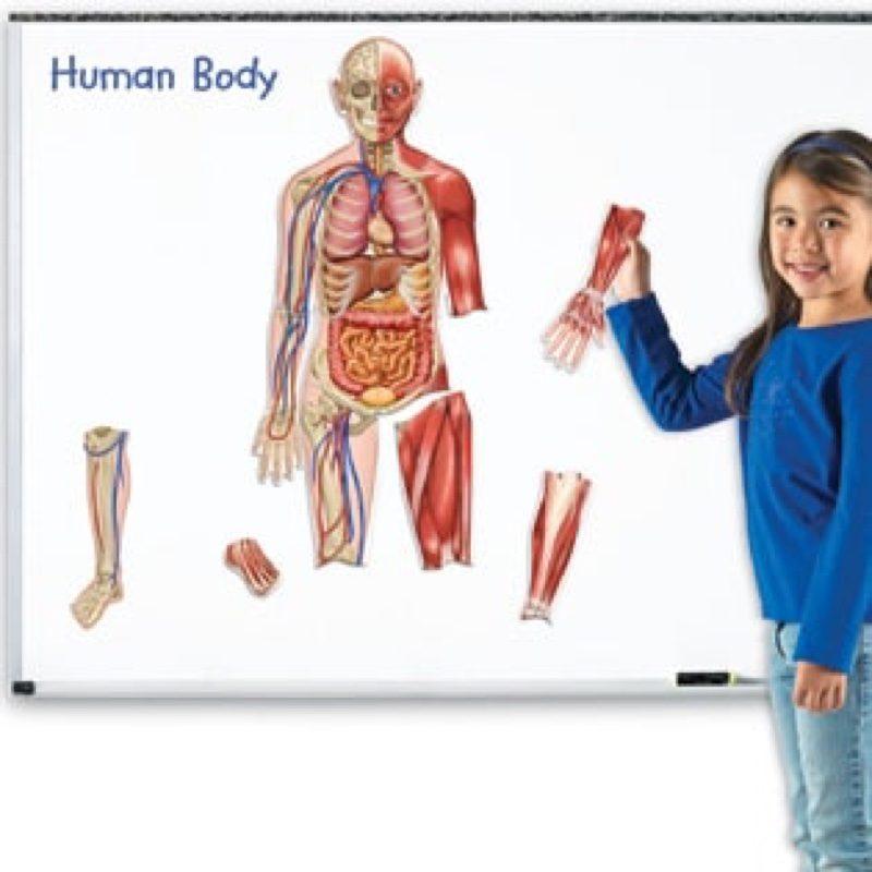 Cuerpo humano magnético, de Learning Resources